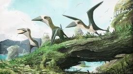 Pequeño pterosaurio reclama un lugar en el árbol genealógico de los reptiles