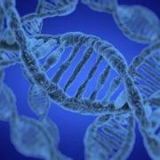 ADN de plantas y animales sugiere que los primeros americanos tomaron la ruta costera