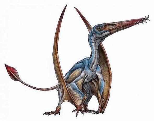 Descubren en la Patagonia los fósiles de un nuevo pterosaurio, un reptil alado que no era ave ni dinosaurio