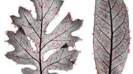Con ayuda de computadoras, científicos estudian las 'huellas dactilares' de las hojas