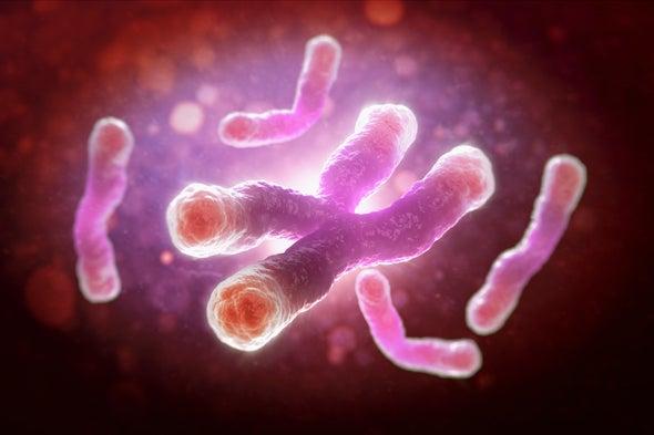 Medir el largo de los telómeros sirve de poco para predecir la esperanza de vida