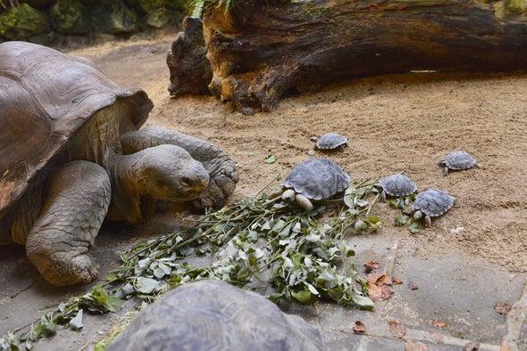 A los 80 años, tortuga gigante de Galápagos vuelve a ser madre