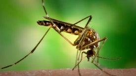EE. UU. con la mira en enfoques innovadores para combatir el zika