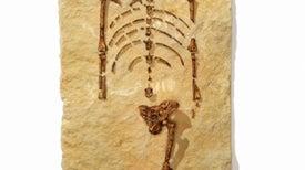 40 años del hallazgo de Lucy, encuentro con un antepasado homínido