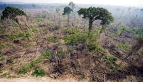La deforestación en la Amazonía se incrementa