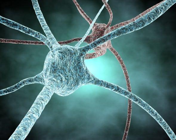 Los recuerdos residirían en el interior de las neuronas y no en sus sinápsis