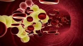 El colesterol juega un nuevo papel en la regulación de proteínas cerebrales