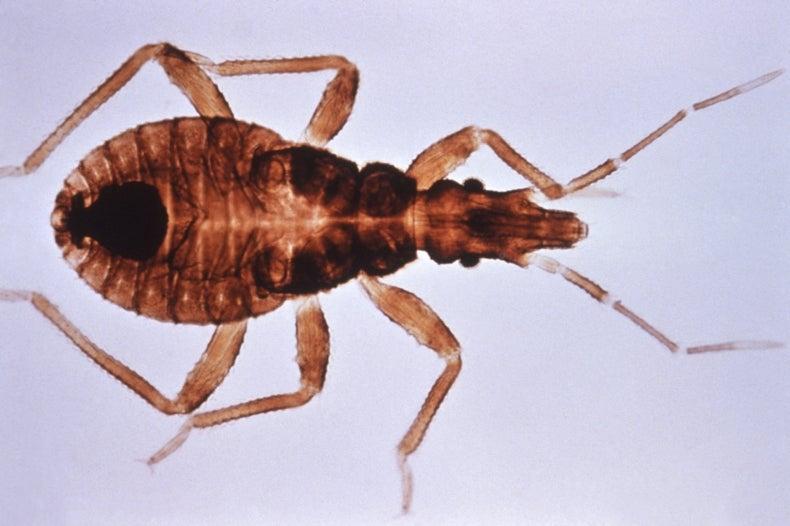Proteína abre camino en la búsqueda de nuevos tratamientos contra el mal de Chagas