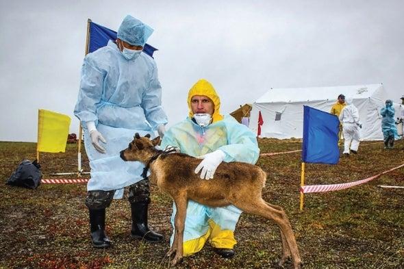 Conforme la Tierra se calienta, las epidemias que guarda el permafrost se vuelven una preocupación