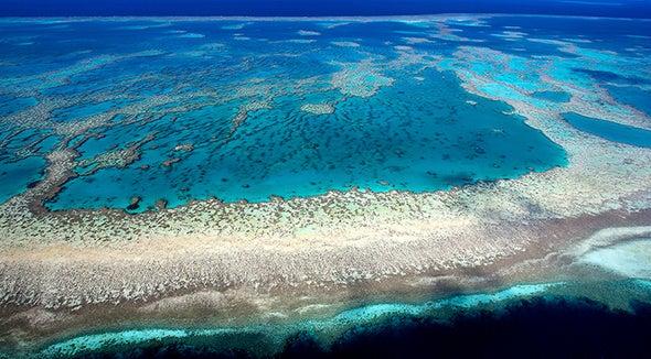 La acidificación del océano está frenando el crecimiento de los arrecifes de coral