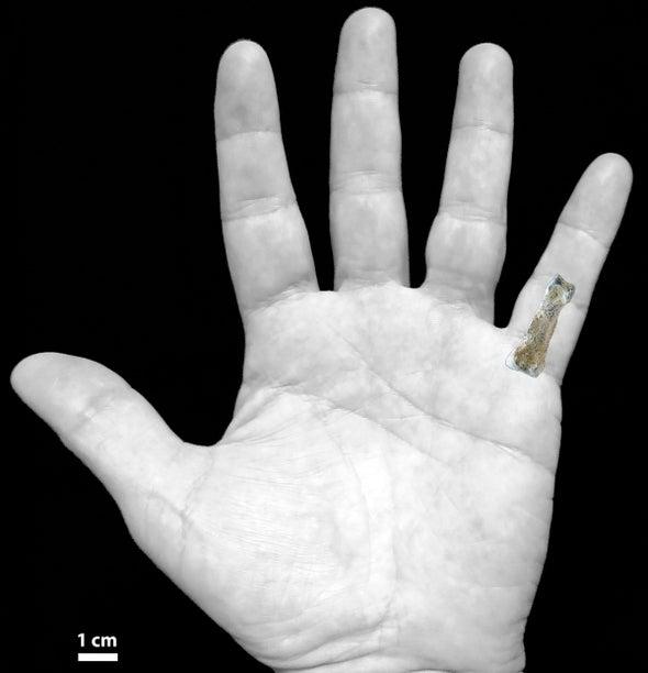El fósil de un hueso de mano ayuda a trazar la transición de los homínidos de la vida en los árboles a la terrestre