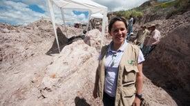 Colombia devela un impresionante depósito de fósiles marinos de hace más de 100 millones de años