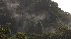 Efecto en cadena: el bosque nuboso en riesgo por impacto del cambio climático en sus hongos