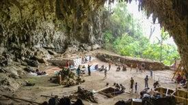 ¿Fueron los humanos quienes llevaron a la extinción a la especie 'hobbit'?
