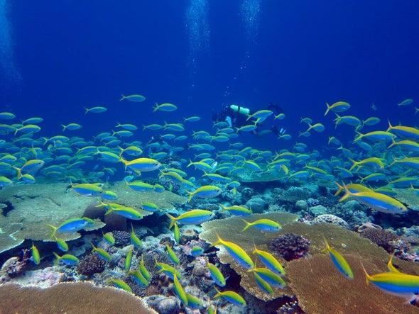Controlar la pesca podría salvar a los arrecifes de coral