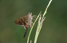 Las mariposas de Isla Barro Colorado