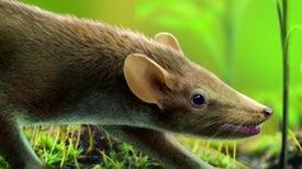 Descubren en España un pequeño mamífero de la época de los dinosaurios