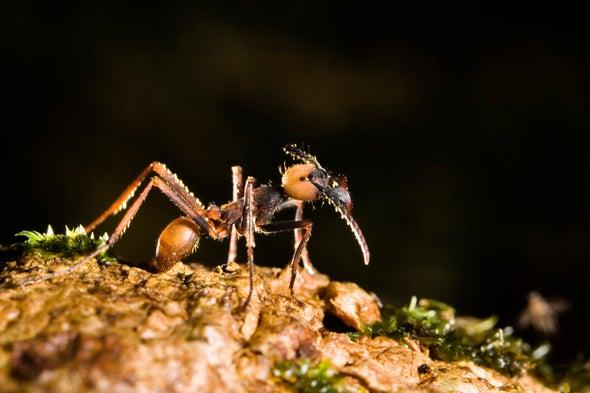El genoma de las hormigas reescribe la historia del istmo de Panamá