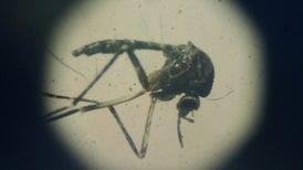 OMS declara fin de emergencia por virus de Zika, pero aún se requieren medidas