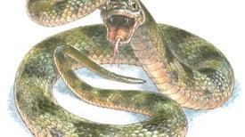 Fósil de serpiente revela sus colores originales