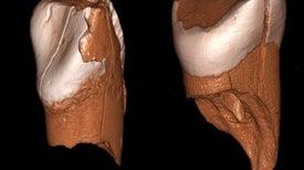 La superioridad tecnológica de los humanos modernos llevó a la extinción de los neandertales