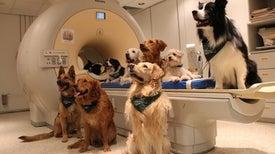 Puede que los perros entiendan más de lo que pensamos