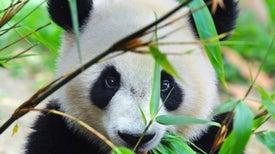 Especies emblemáticas están amenazadas por el calentamiento global