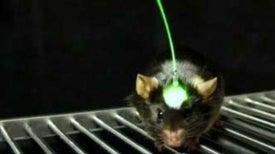 Breakthrough Prize galardona técnica que permite controlar el cerebro con la luz
