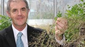 Convertir plantas en fábricas de medicamentos