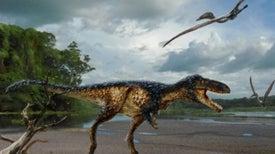 Nueva especie de tiranosaurio revela cómo el rey de los dinosaurios ganó su corona
