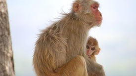Los monos aprenden a reconocerse en el espejo