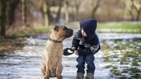 Un estudio sitúa en Asia el origen de la relación entre perros y hombres