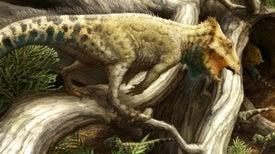 Pequeño fósil pertenece a la más antigua –y linda– especie de dinosaurios con cuernos de América del Norte