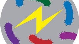 Las bacterias se comunican mediante señales eléctricas, igual que las neuronas