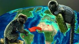 Fósil hallado en Perú apunta a que los monos americanos tienen un origen africano
