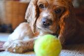Los perros distinguen los diferentes componentes del habla humana