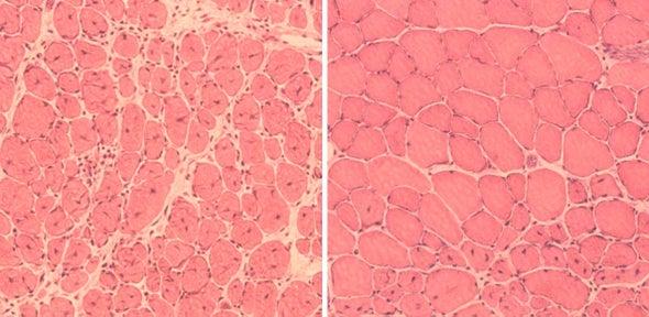 Alargan la vida de ratones gracias a la reprogramación celular