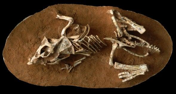 Los huevos de los dinosaurios tardaban hasta seis meses en eclosionar
