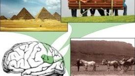 En el cerebro se traslapan las distancias físicas y las emotivas