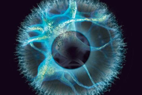 Trasplantes neuronales podrían algún día revertir la ceguera