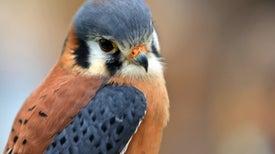 Galería de fotos: Aves de América del Norte