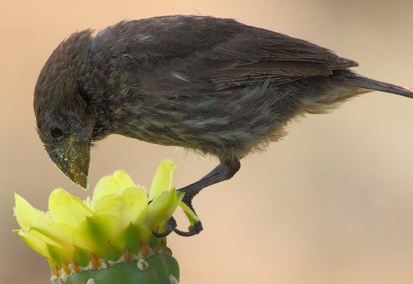 Los pájaros de Galápagos cambiaron su dieta: ahora se alimentan con néctar y polen