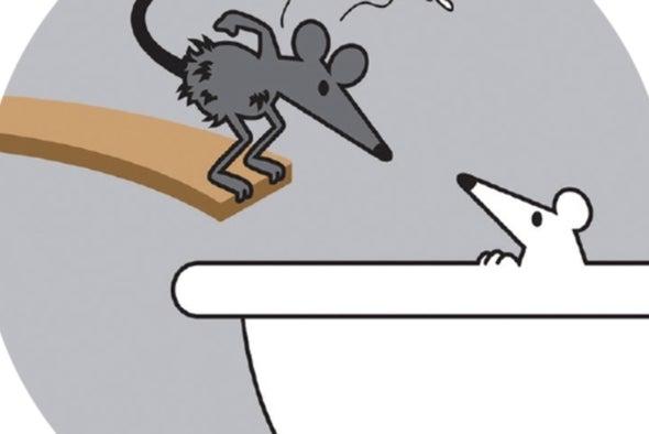 Los ratones de laboratorio son demasiado pulcros