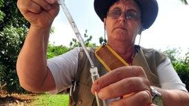 La OMS cree que brote de zika se extenderá por casi todo el continente