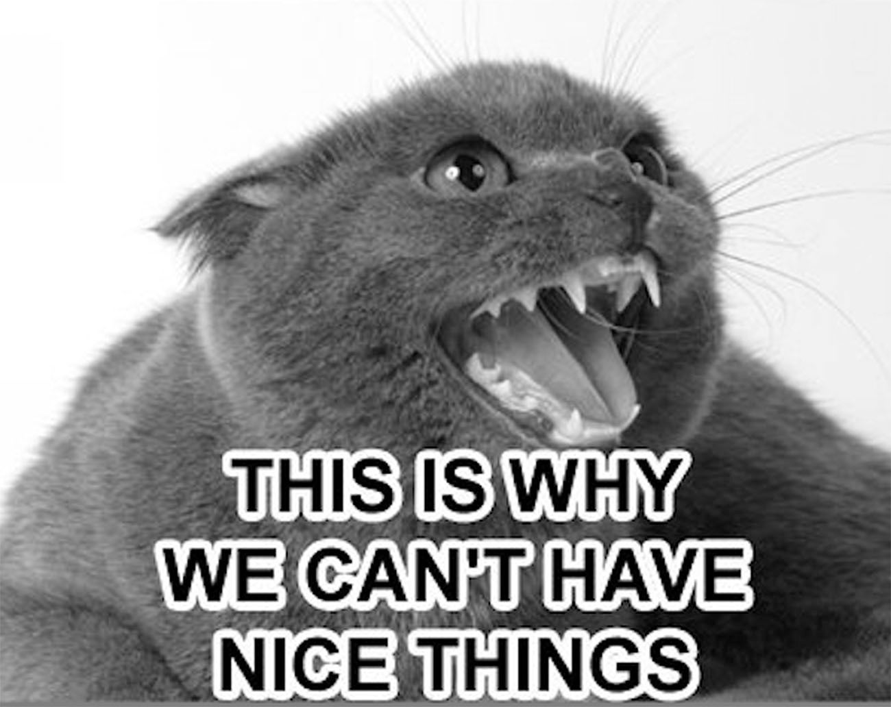 "an angry cat with caption that reads ""This is why we can't have nice things"""