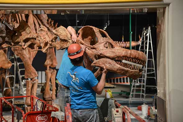 122-Foot Titanosaur: Staggeringly Big Dino Barely Fits into