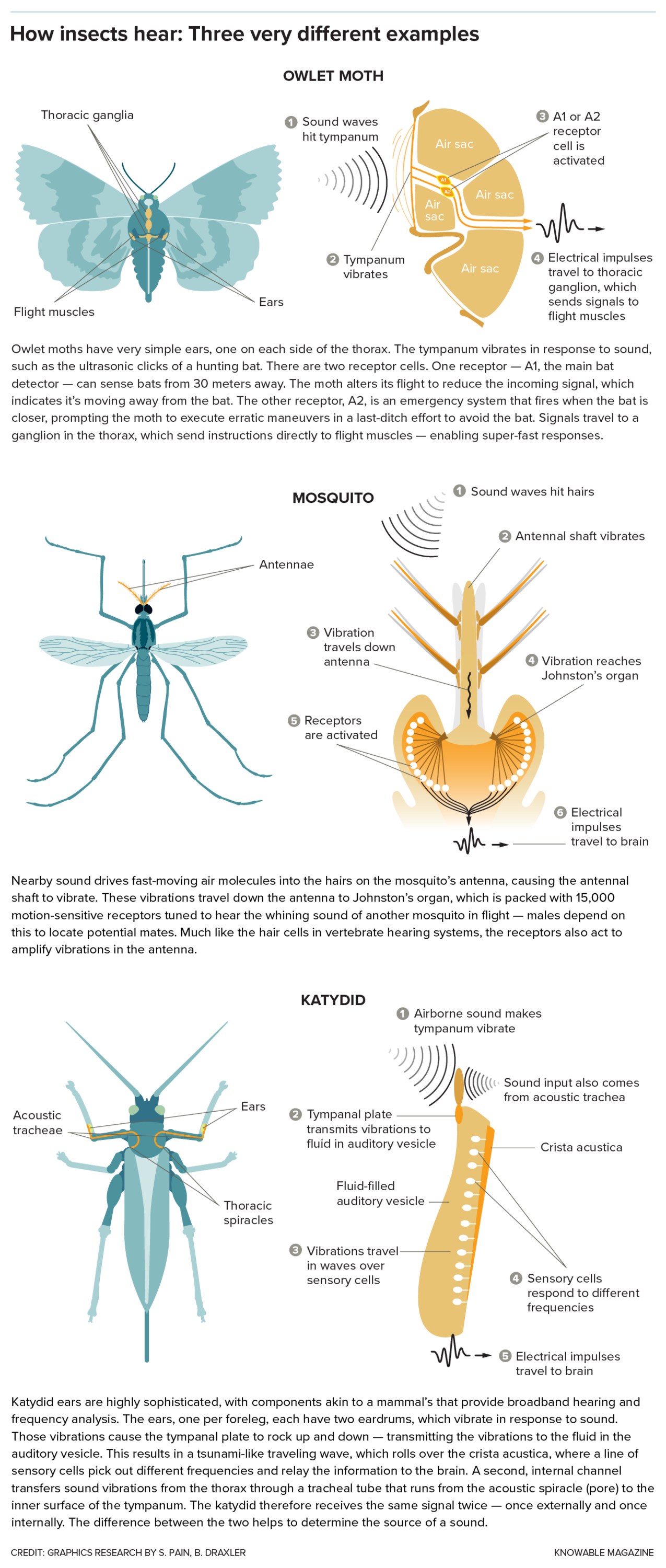 Awesome Ears The Weird World Of Insect Hearing Scientific American