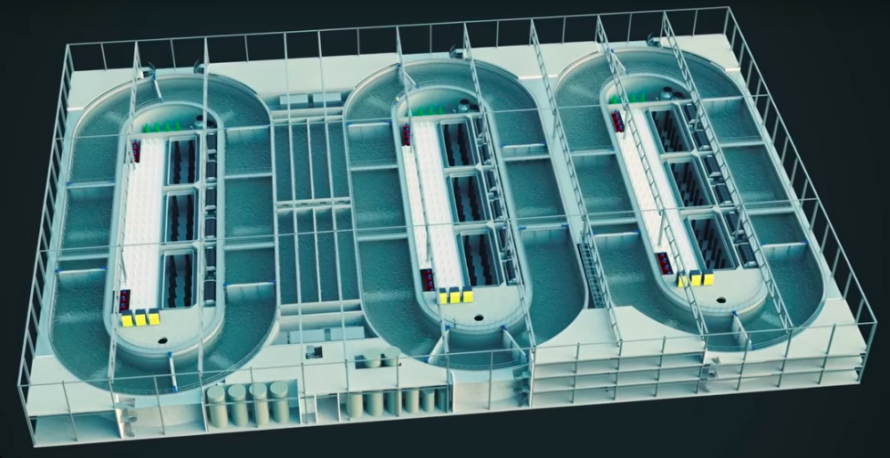 The Future of Fish Farming May Be Indoors - Scientific American