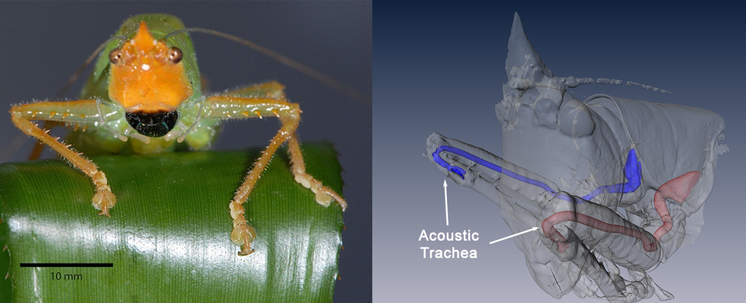 Awesome Ears: The Weird World of Insect Hearing - Scientific