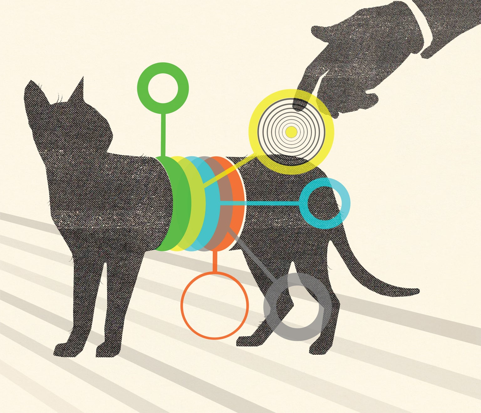 The Inner Life of Cats - Scientific American